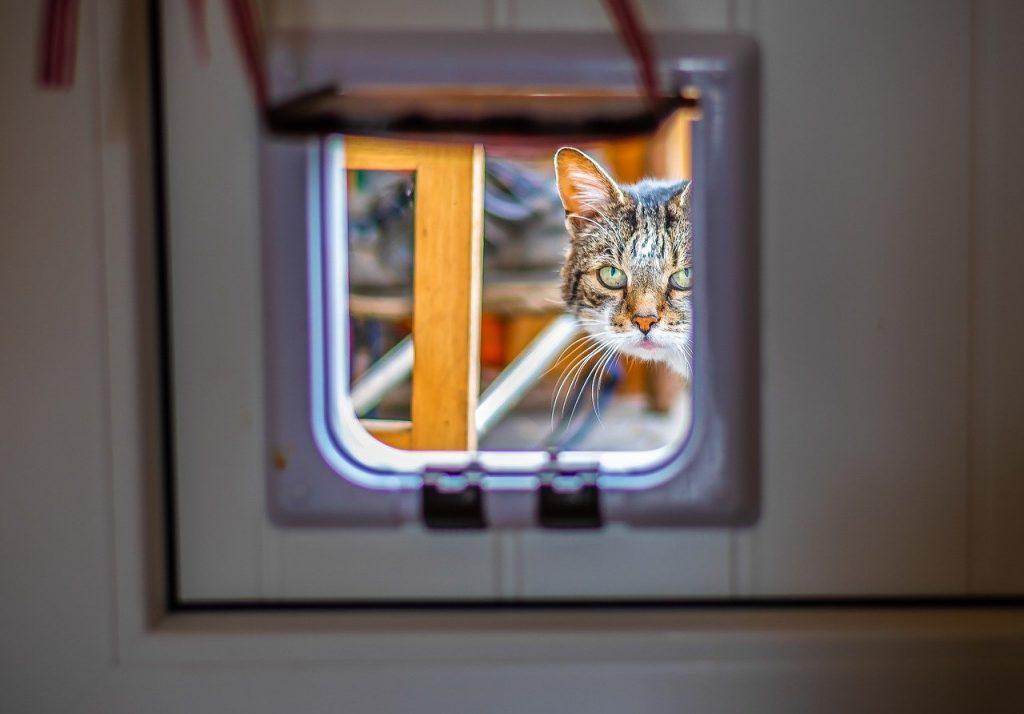 DIY: Kattenluik plaatsen: zo moet het